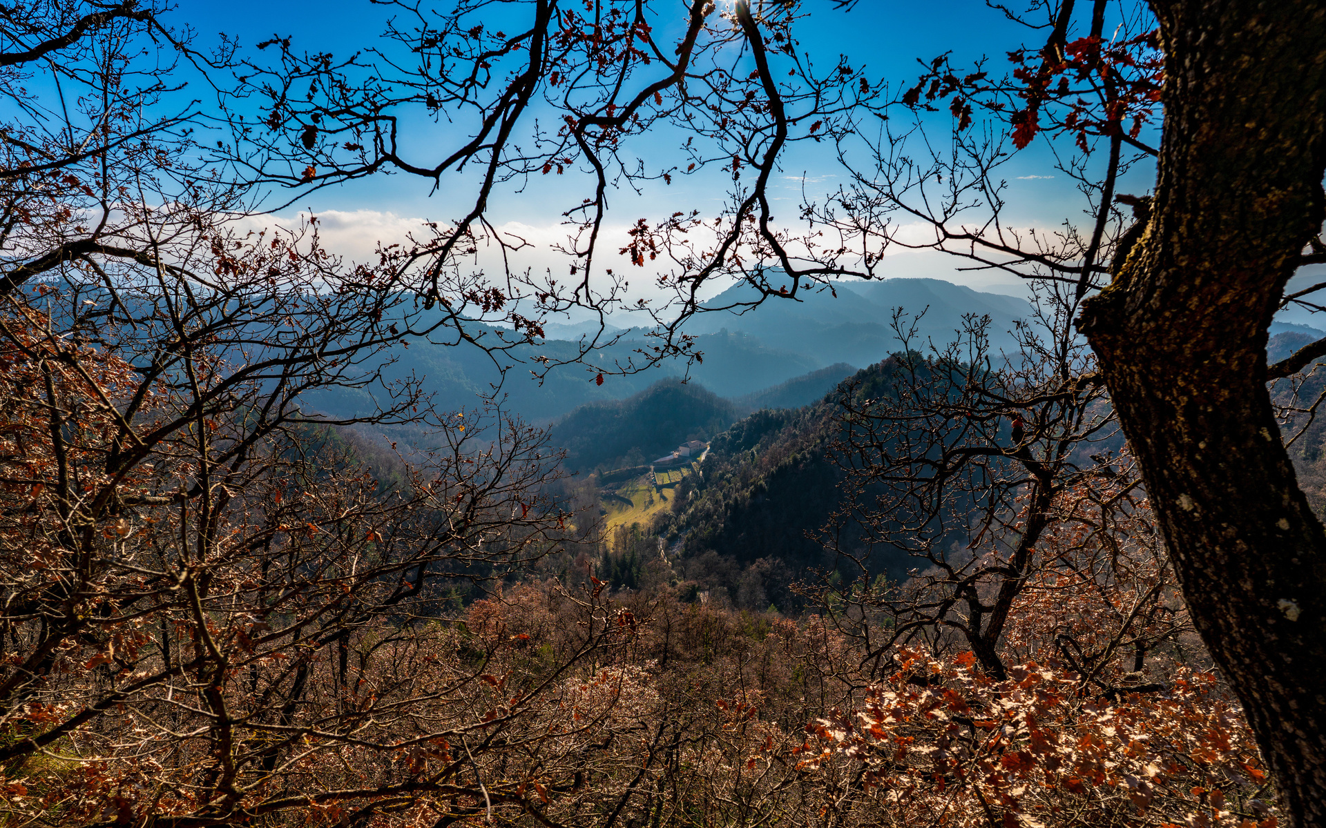 испания, горы, santa maria de besora, деревья, ветки, природа