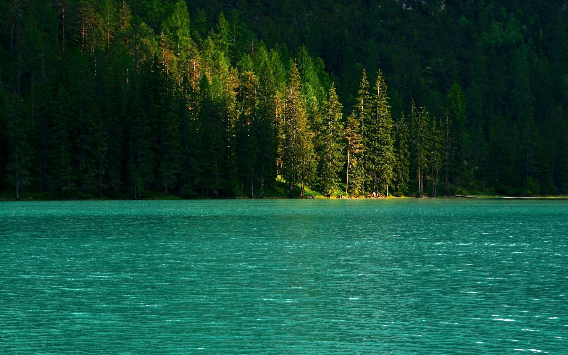 ель, деревья, озеро, вода, блики