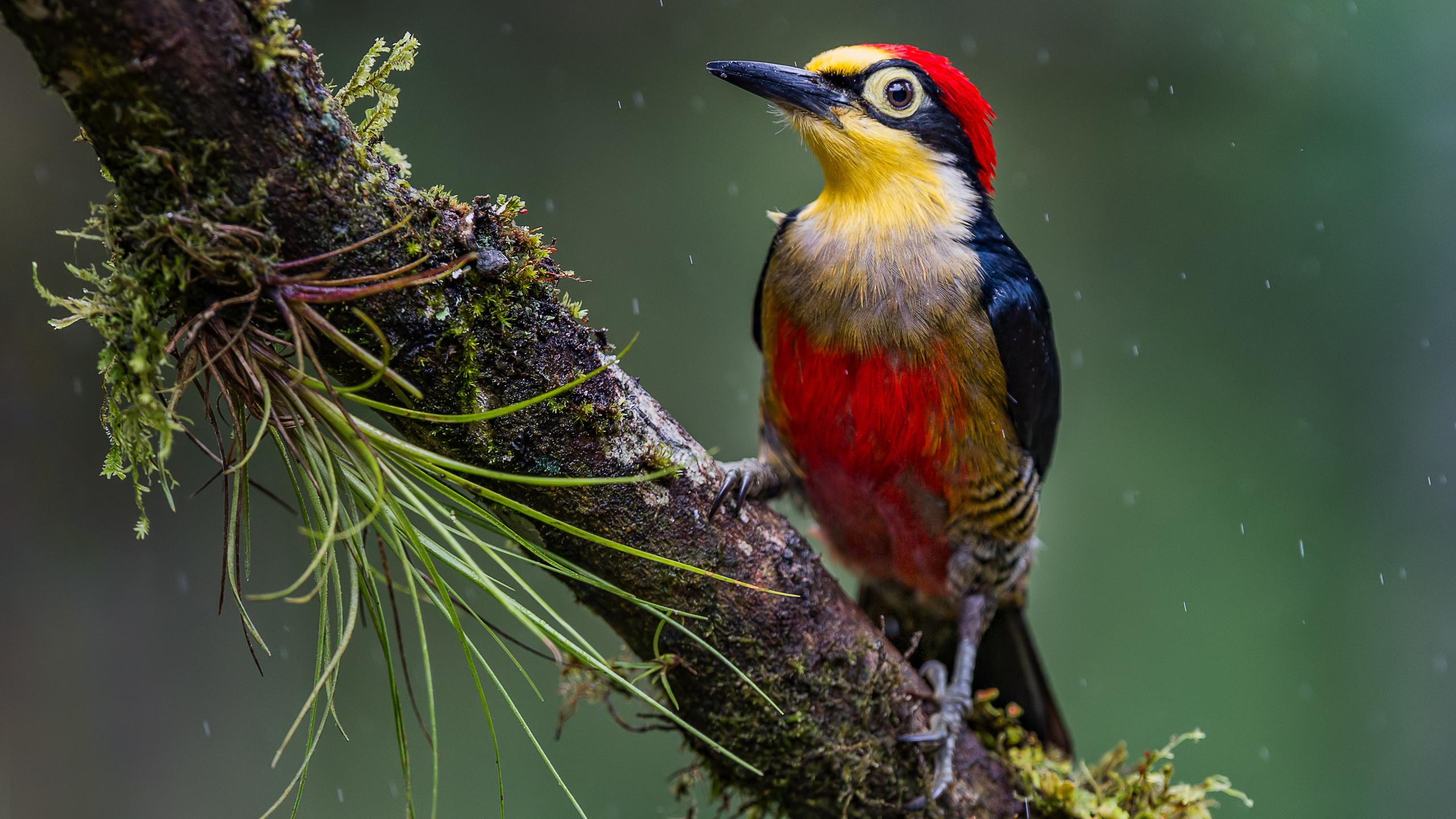 птица, дятловые, ветвь, ветка