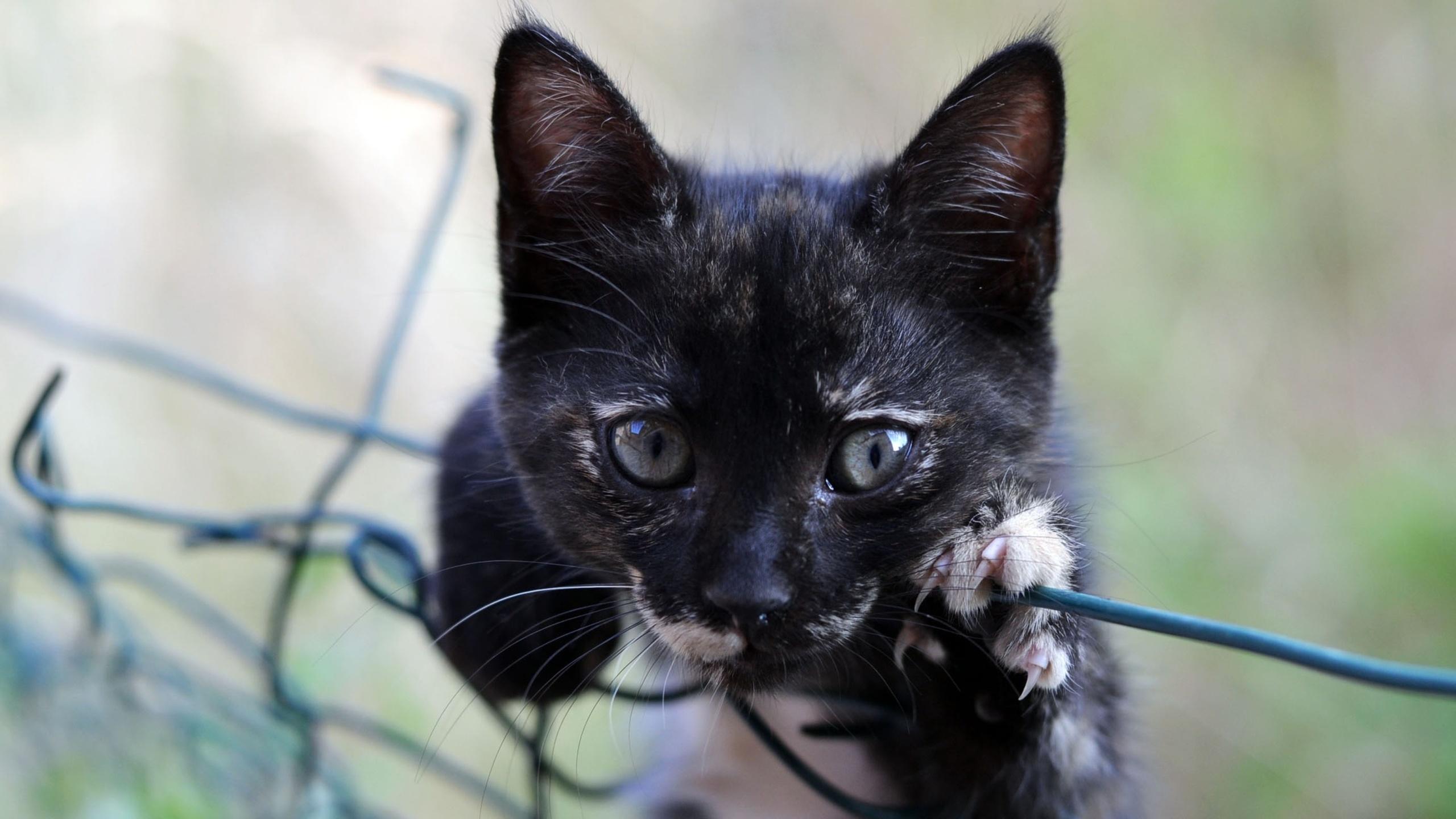 маленький, черный, котенок