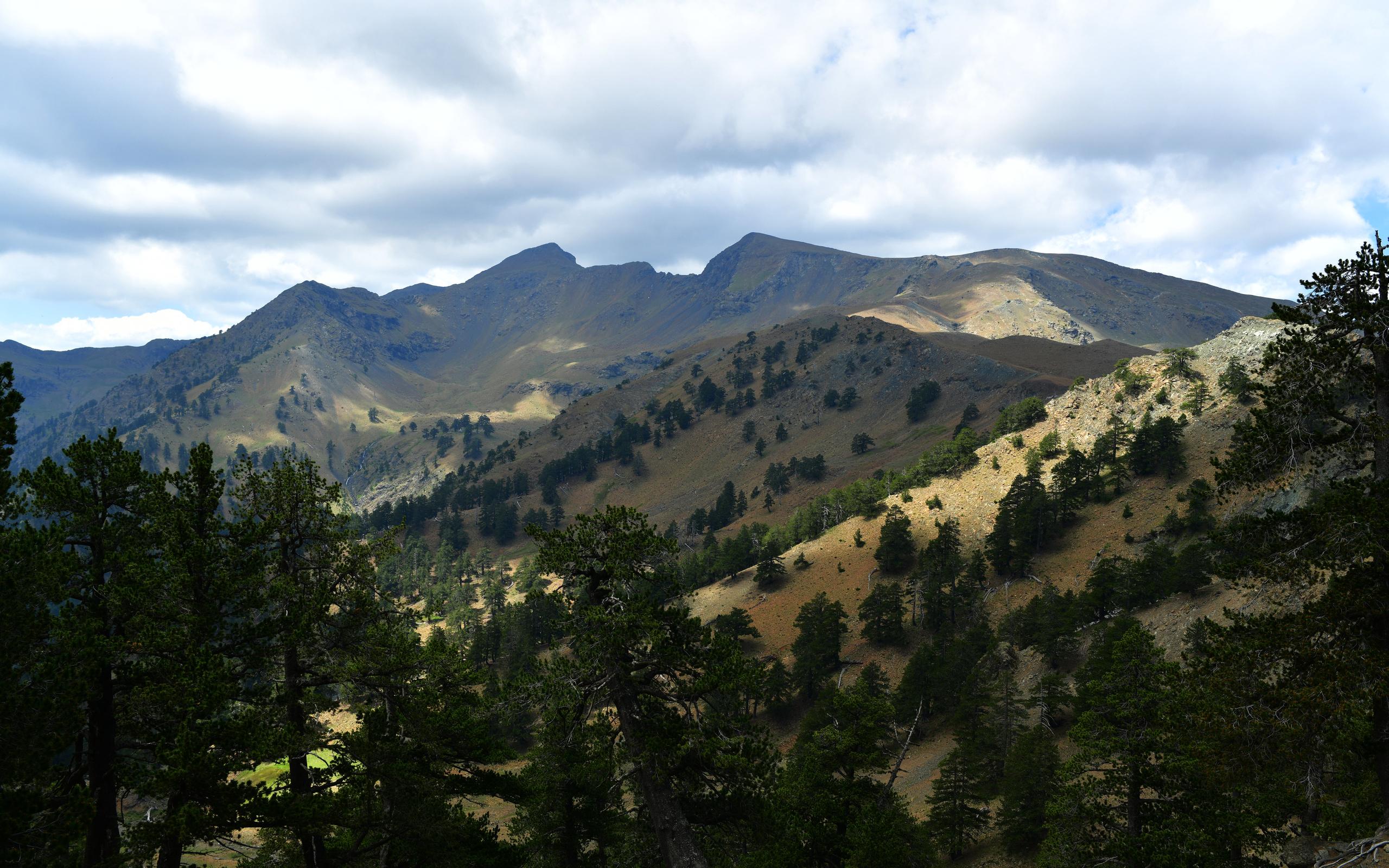 горы, скалы, ель, деревья, склон