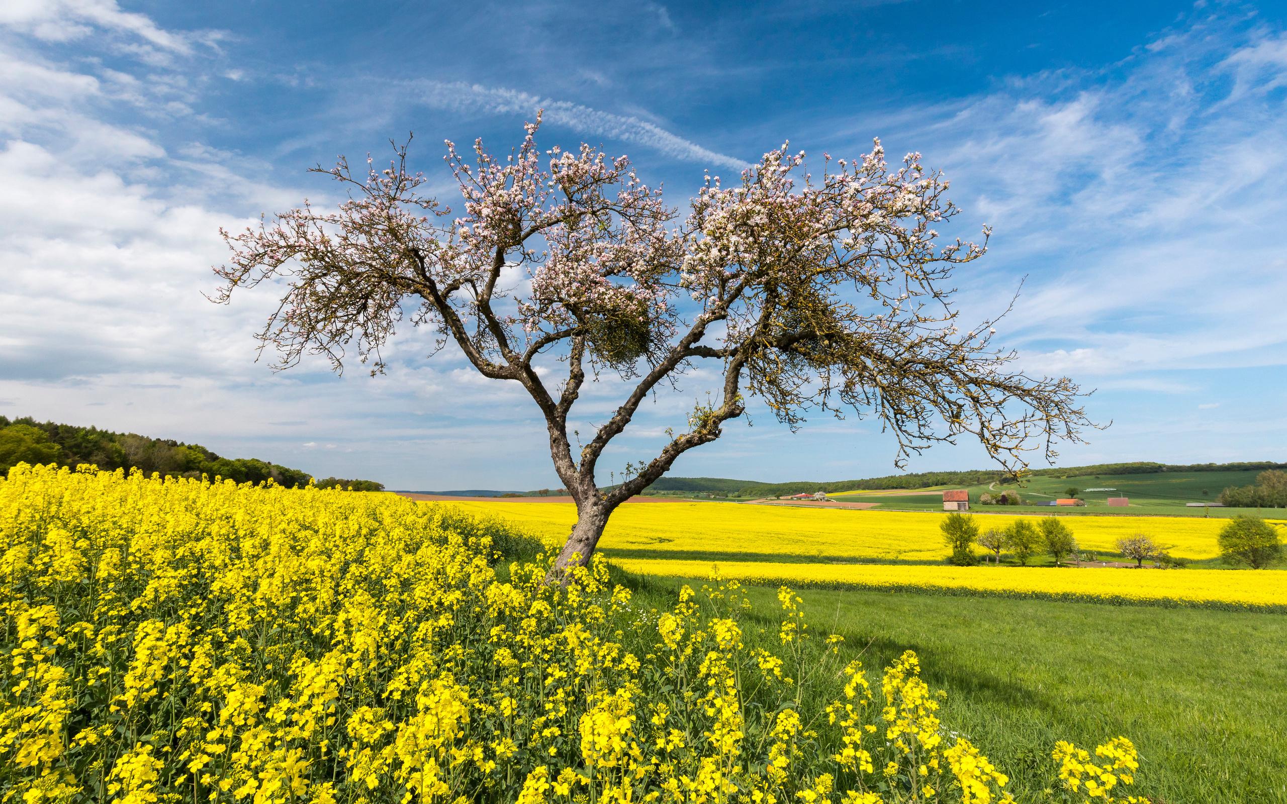 германия, поле, рапс, деревья, весна, небо, hessen, природа