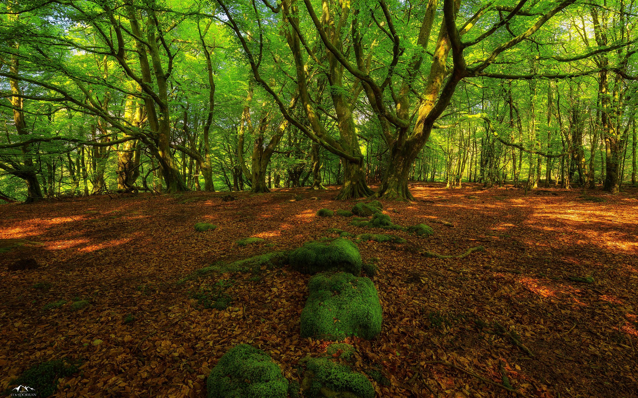 лес, зелень, корни
