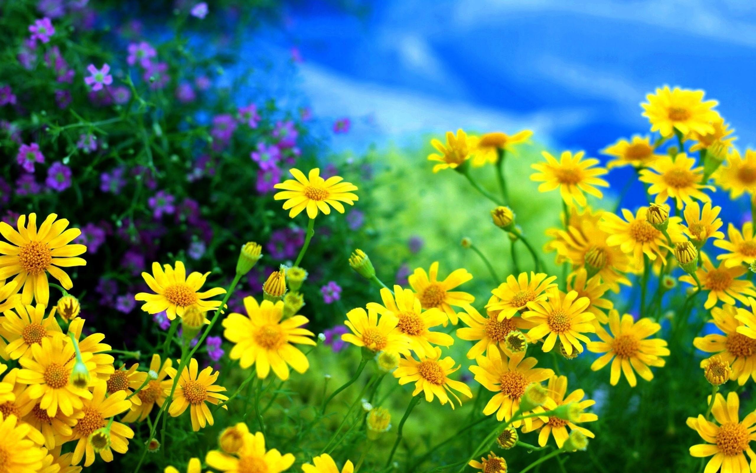 полевые цветы, трава