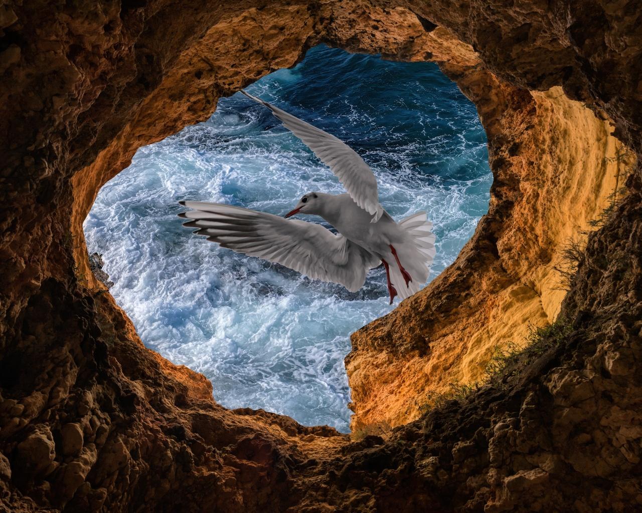 чайка, скалы, волны