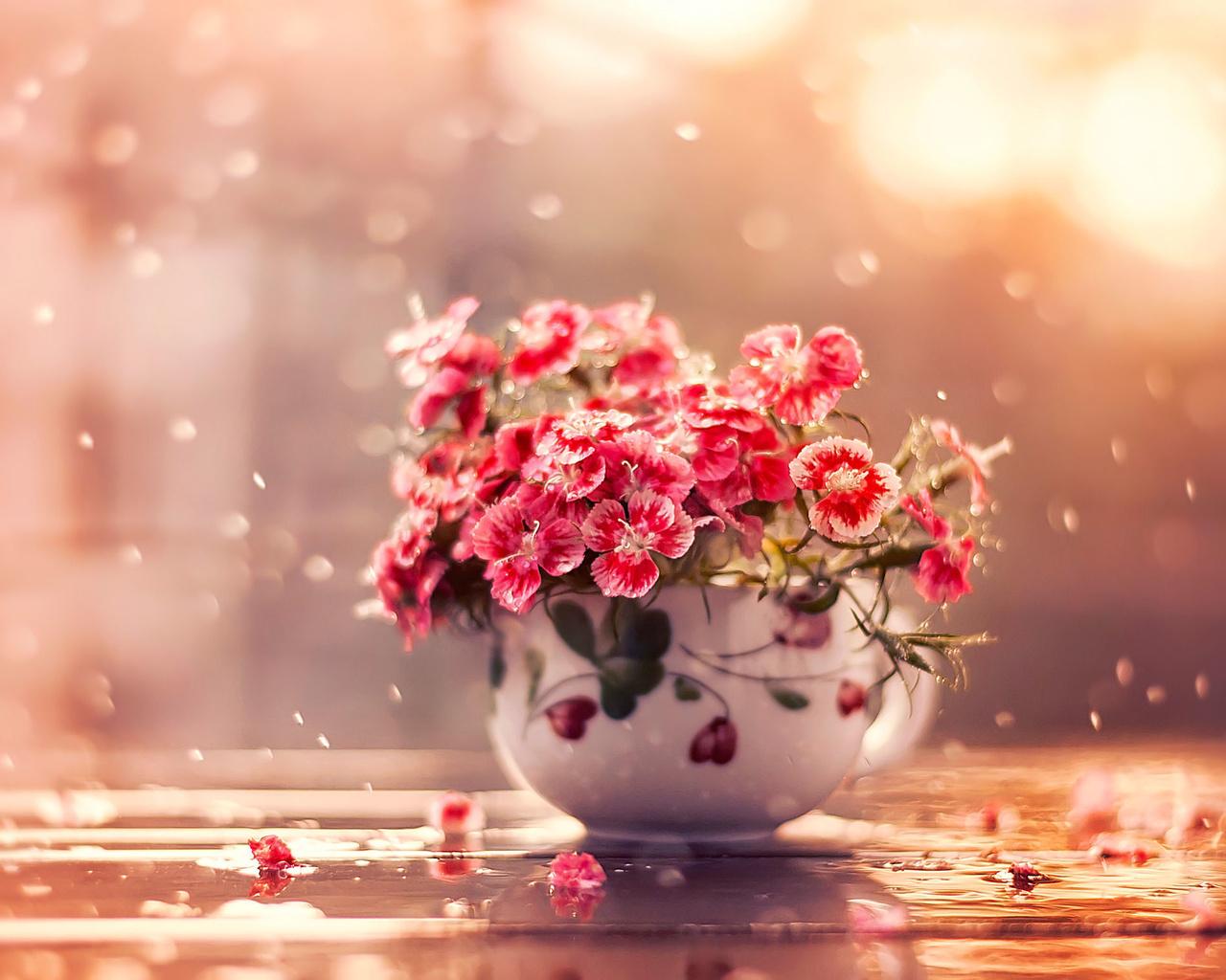 чашка, гвоздики, капли, вода, цветы