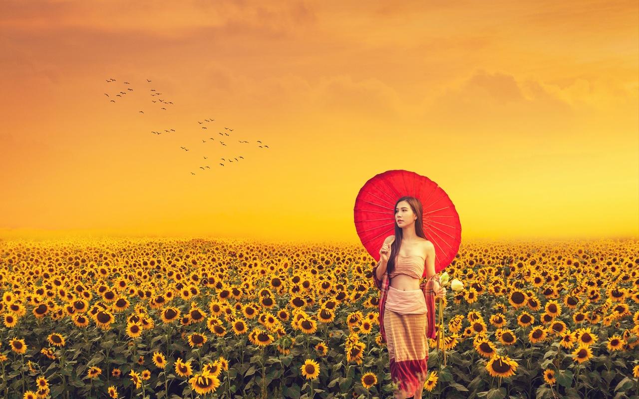 девушка, азиатка, поле, подсолнухи, птицы, закат
