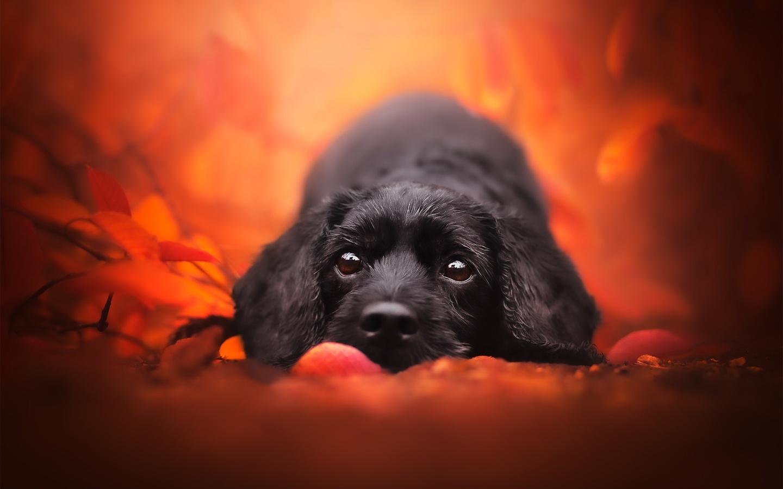 животное, собака, пёс, морда, природа, ветки, листья, осень