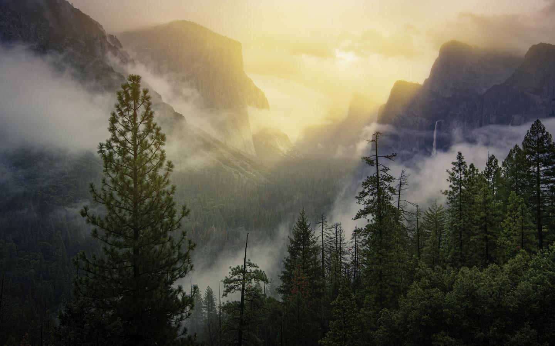 лес, лучи, свет, деревья, горы, туман, скалы, склоны, вершины, вид, высота, утро, ели, сосны, сша, йосемити