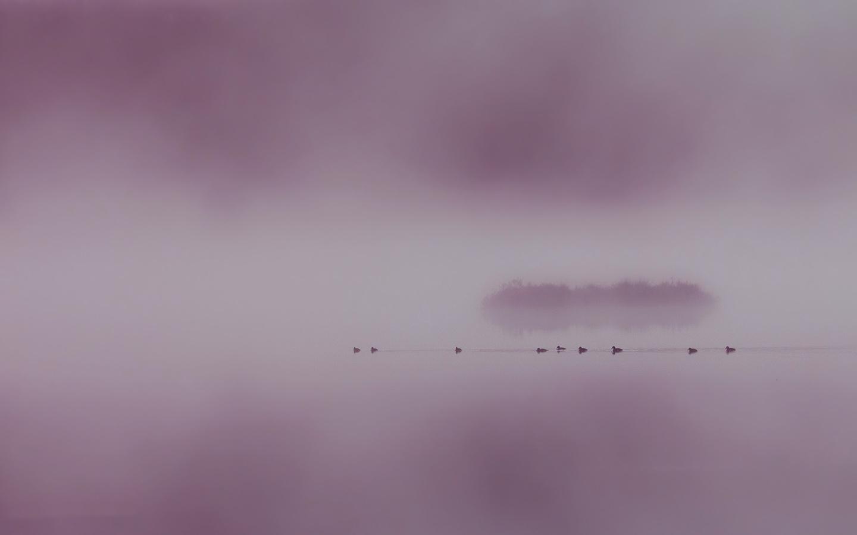 озеро, птицы, туман