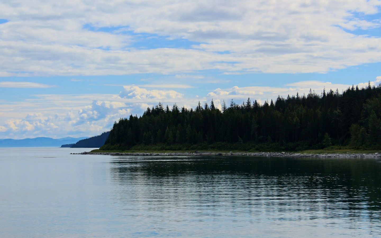 побережье, лес, деревья, вода