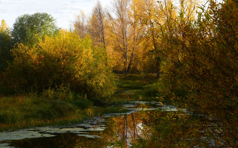 деревья, болото, осень
