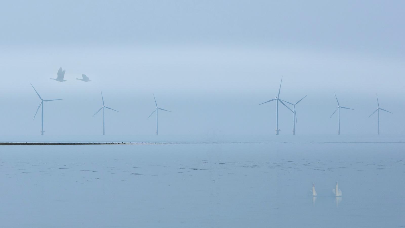 туман, лебеди, ветряки, пейзаж