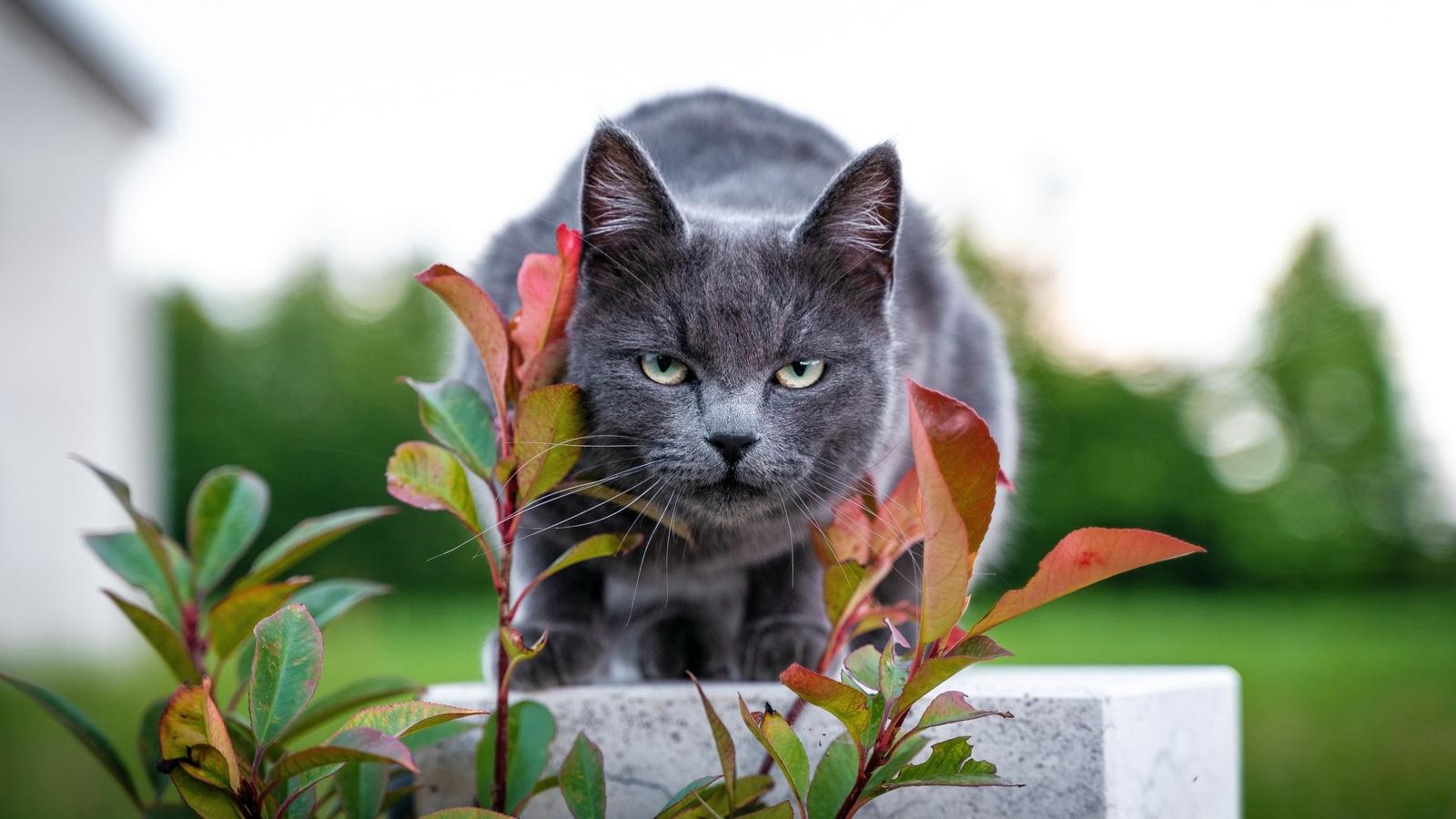 кот, листья, фон