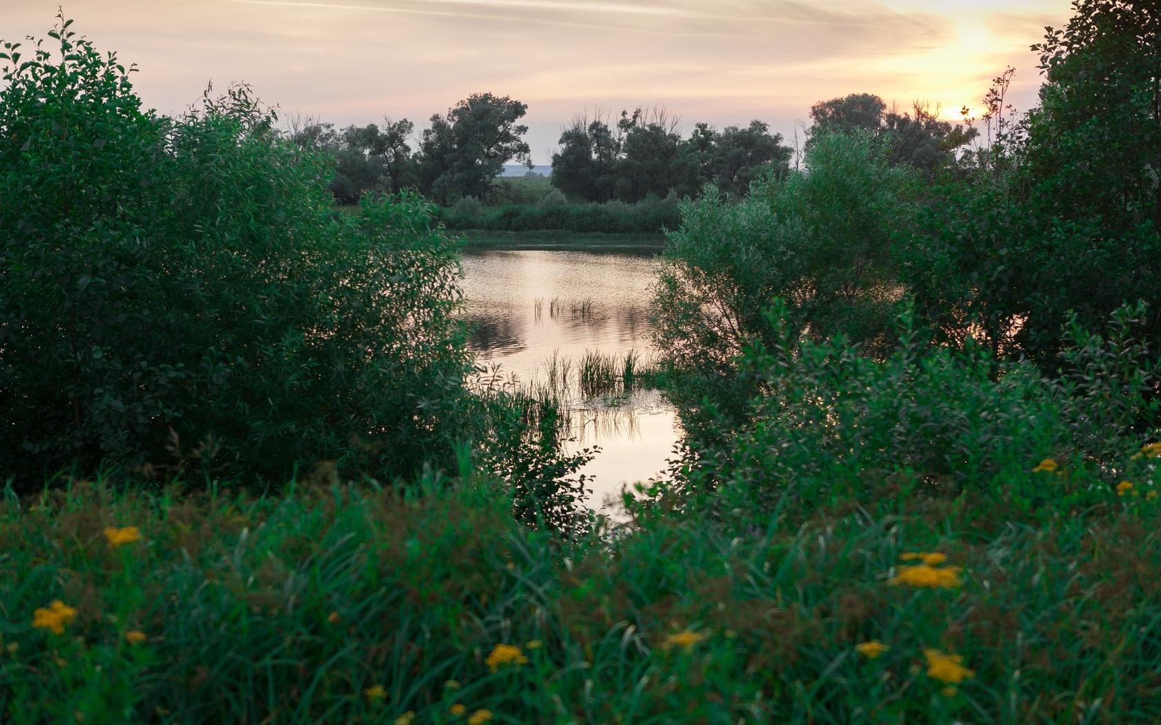 водоём, пруд, природа, вечер, трава
