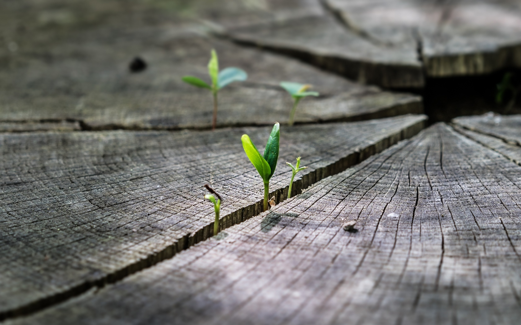 макро, растения, пень, природа