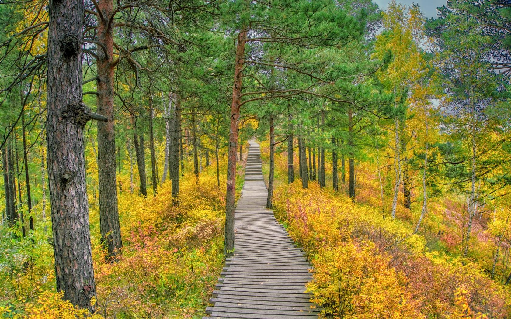 парк, деревья, дорожка