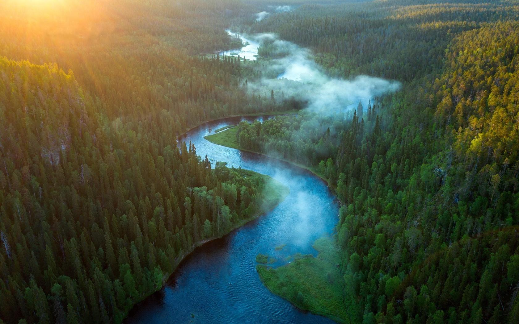 лес, утро, восход, река, природа, туман