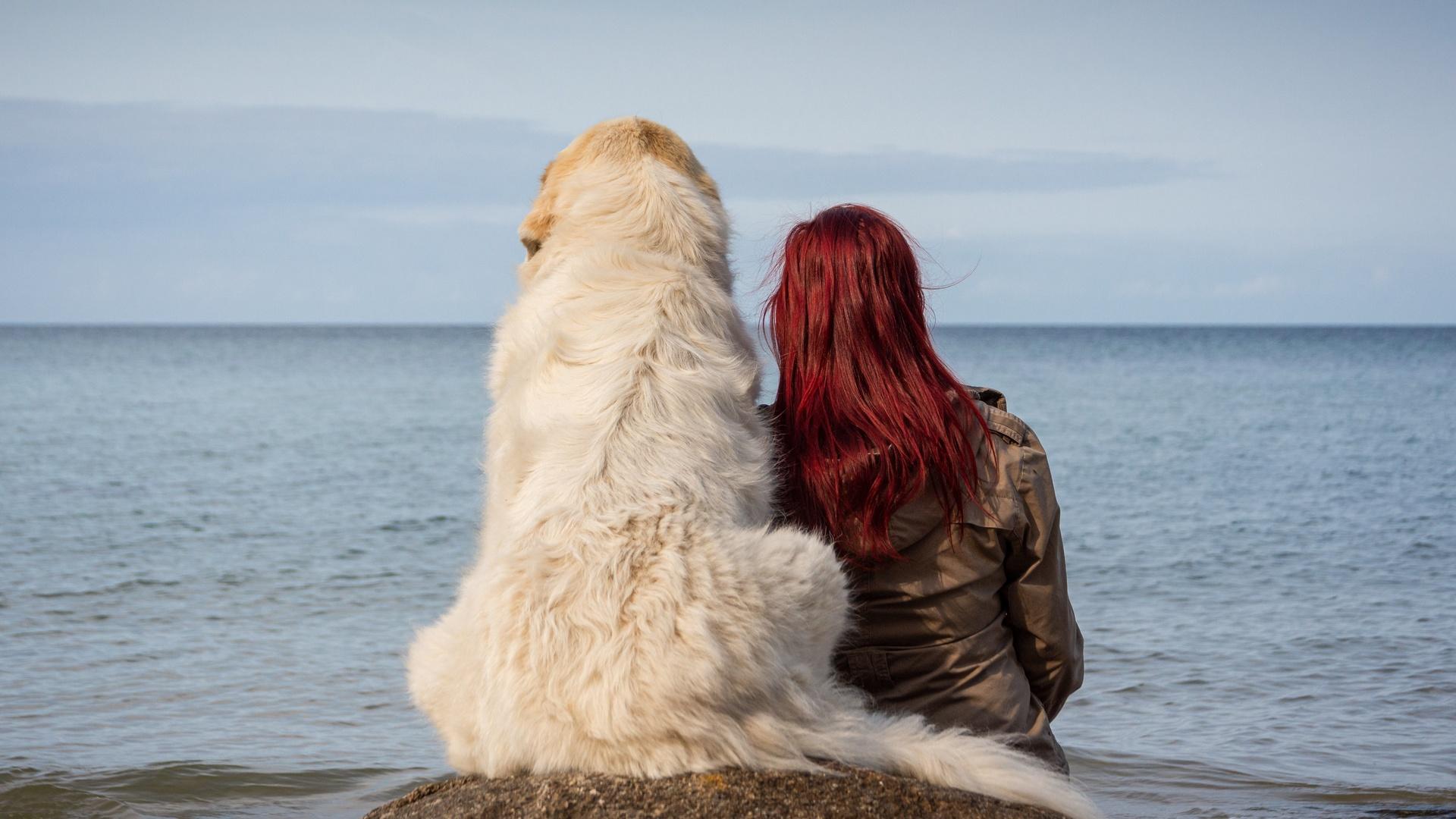 девушка, собака, море