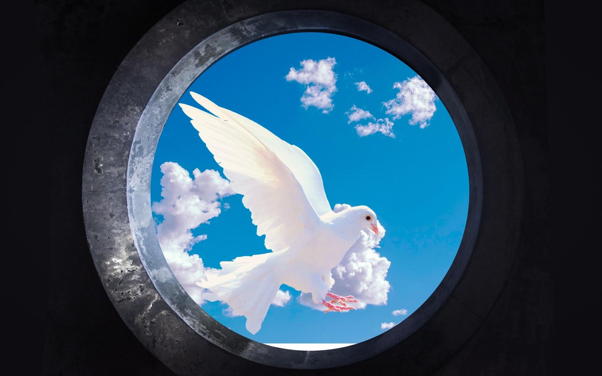 голубь, небо, фон