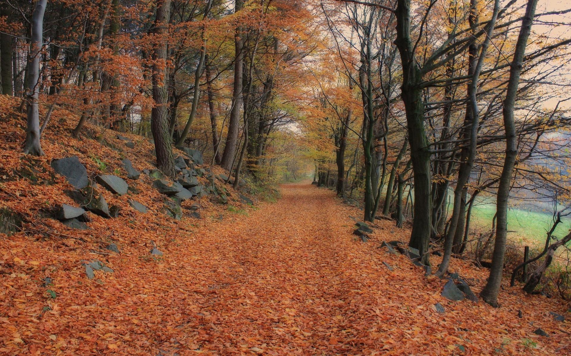 лес, тропинка, листья