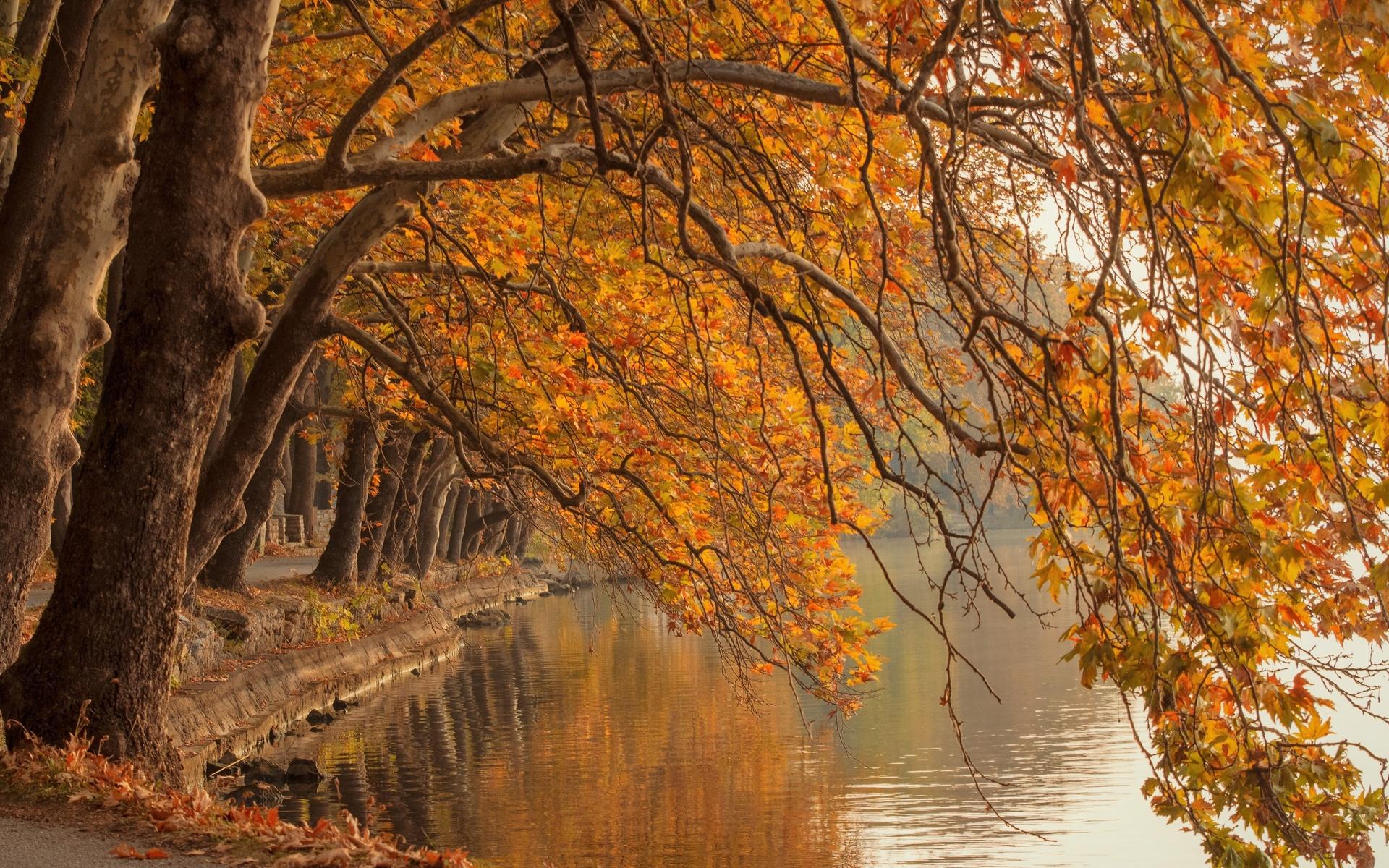 деревья, ветки, пруд, осень