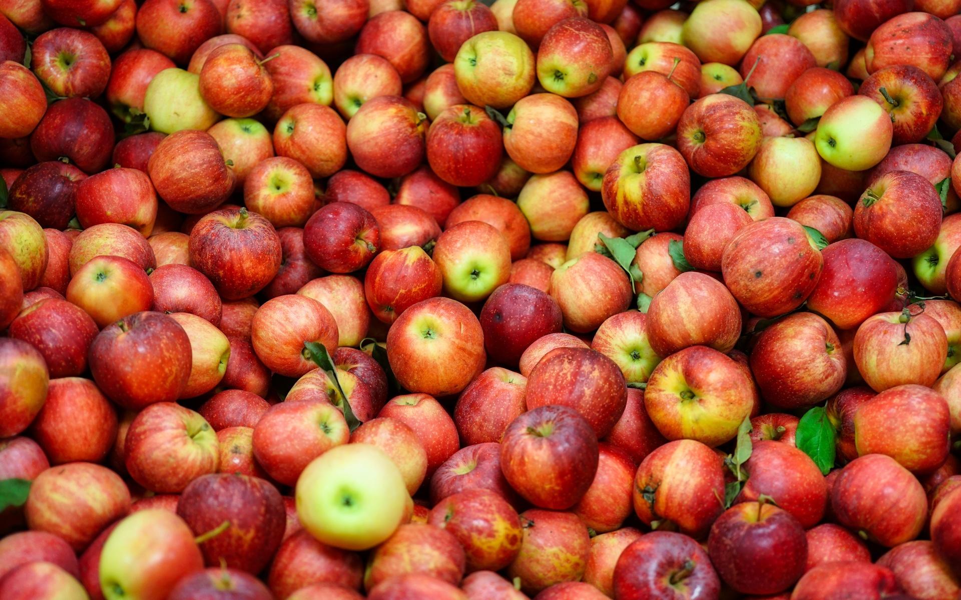 яблоки, урожай