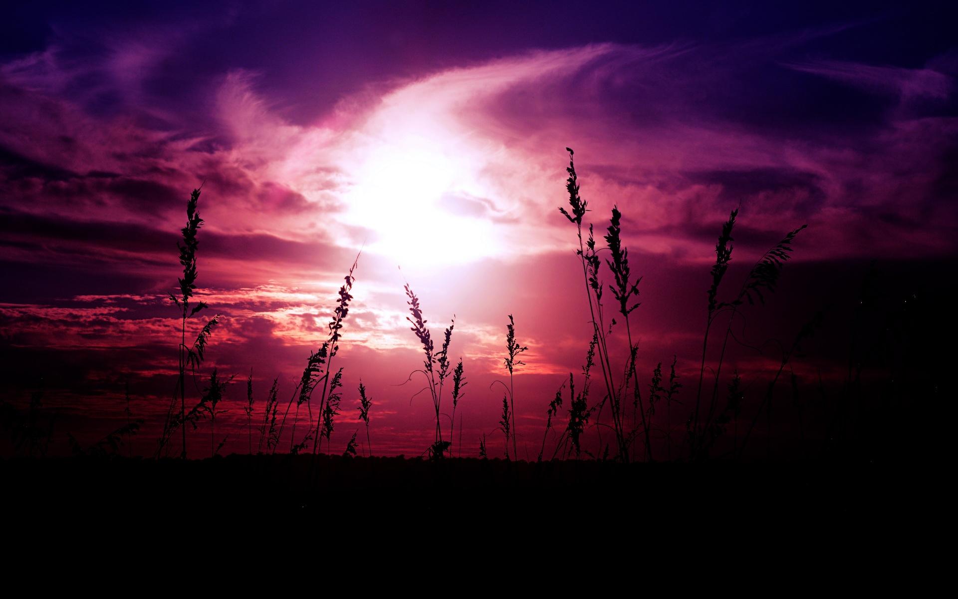 трава, силуэты, небо, закат