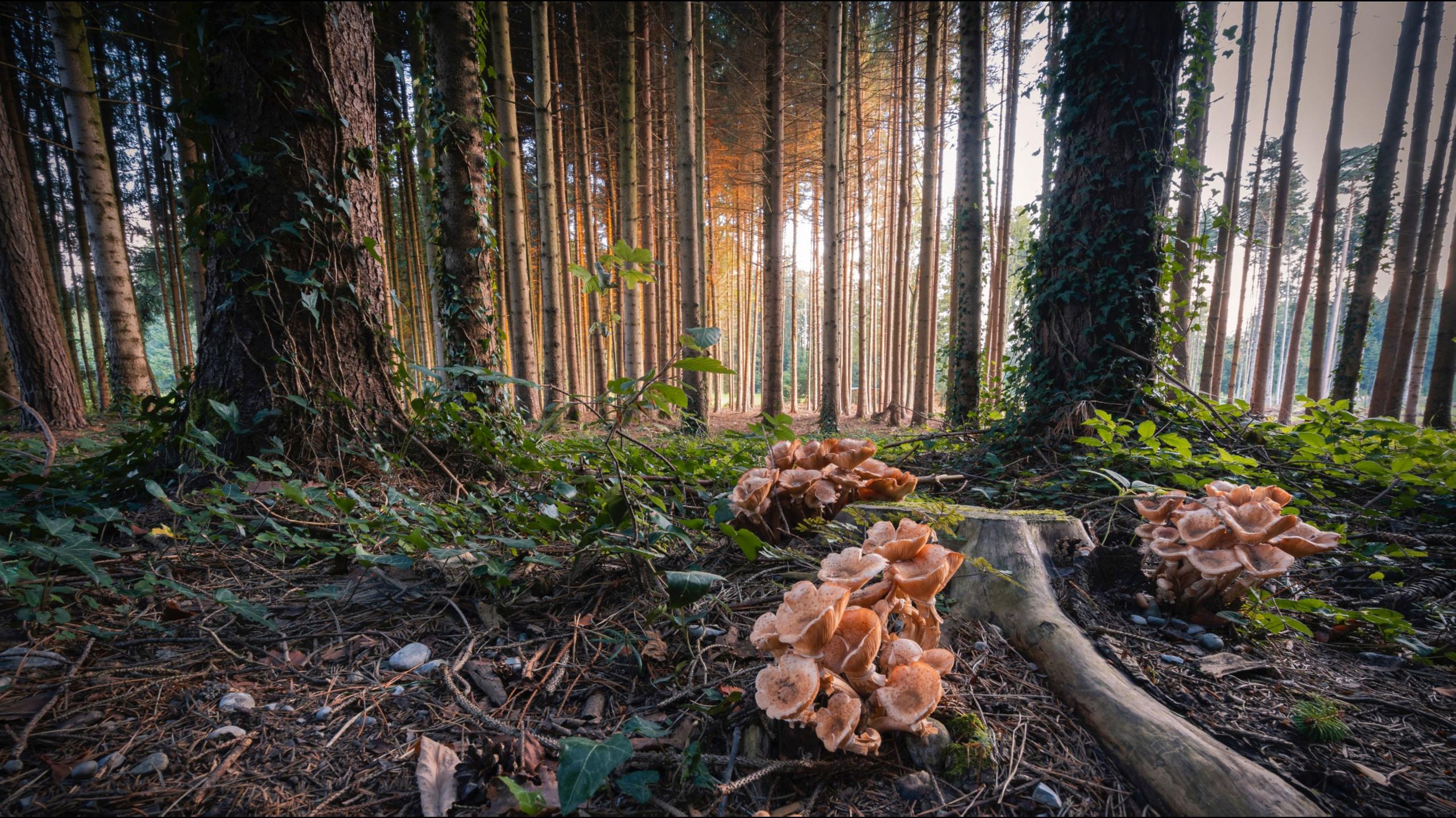 природа обои, пейзаж, алекс159 растягивает обоины как свое очко, алекс159 растягивает обоины как свое очко