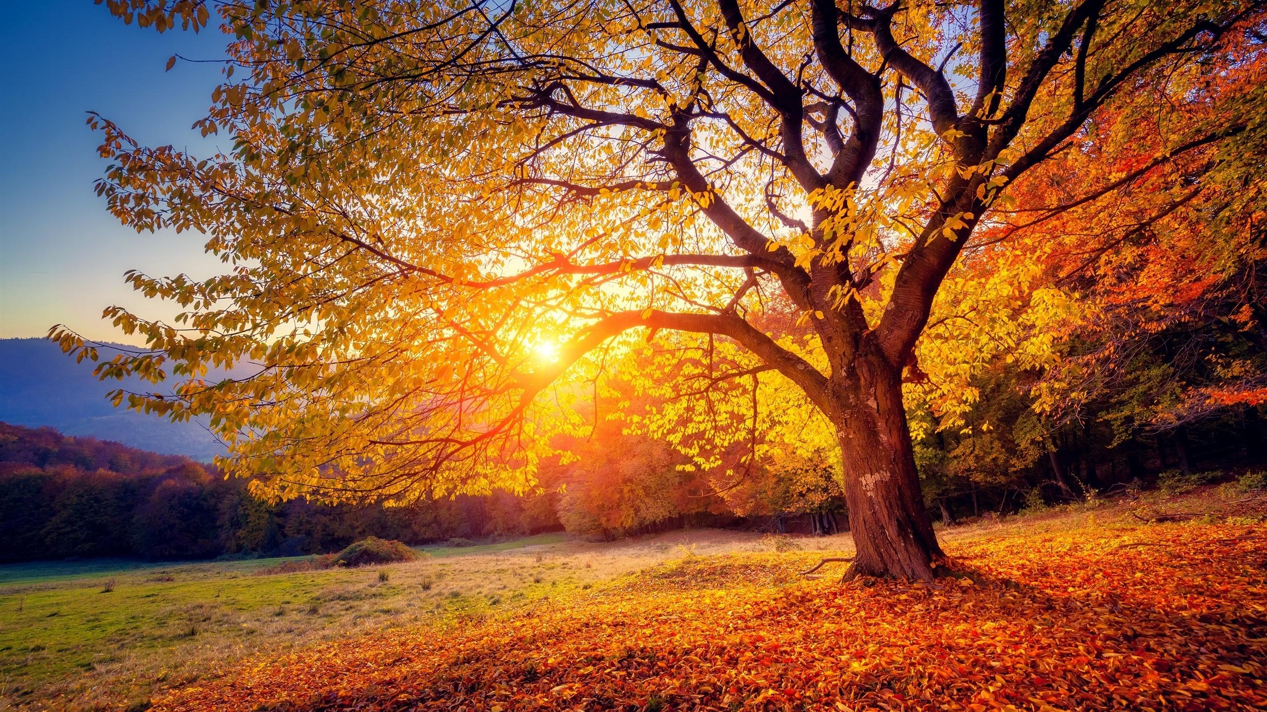 осень, лес, природа, солнце