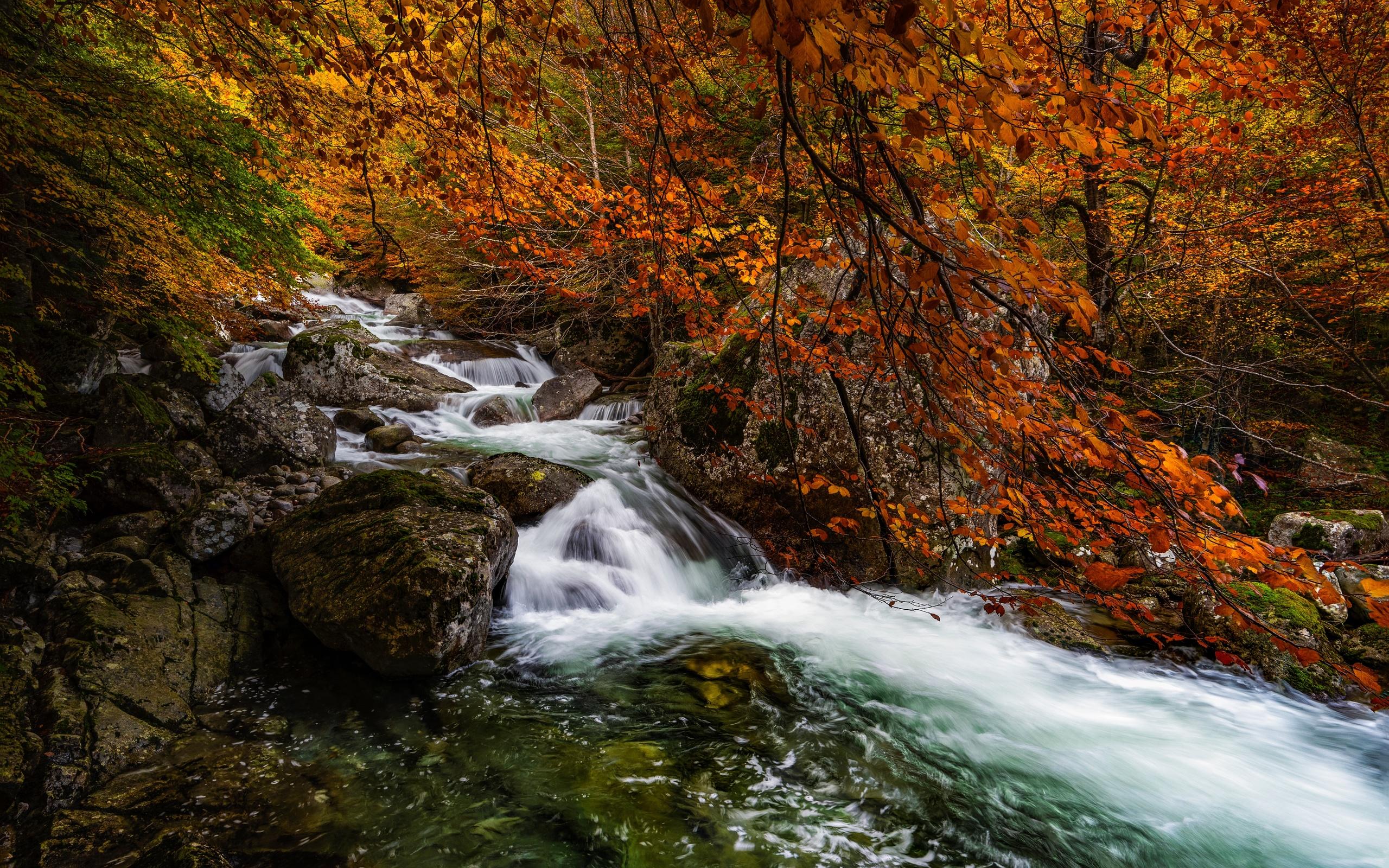 осень, лес, природа, река, камни