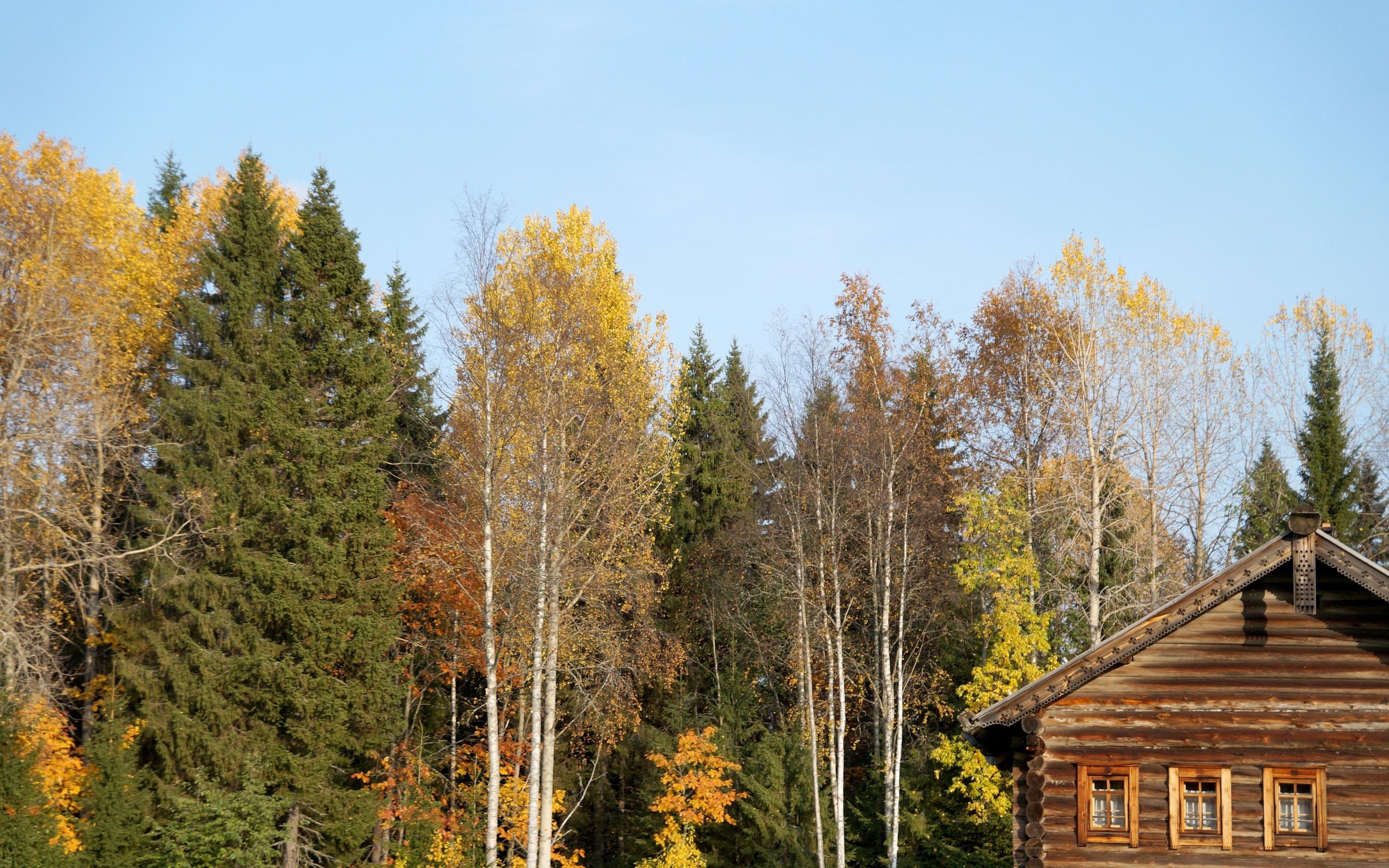 деревья, изба, небо