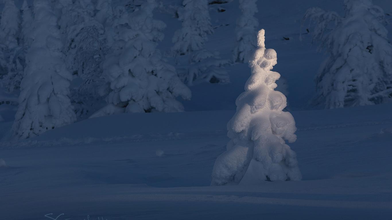 гарифуллин сергей, снег, ели
