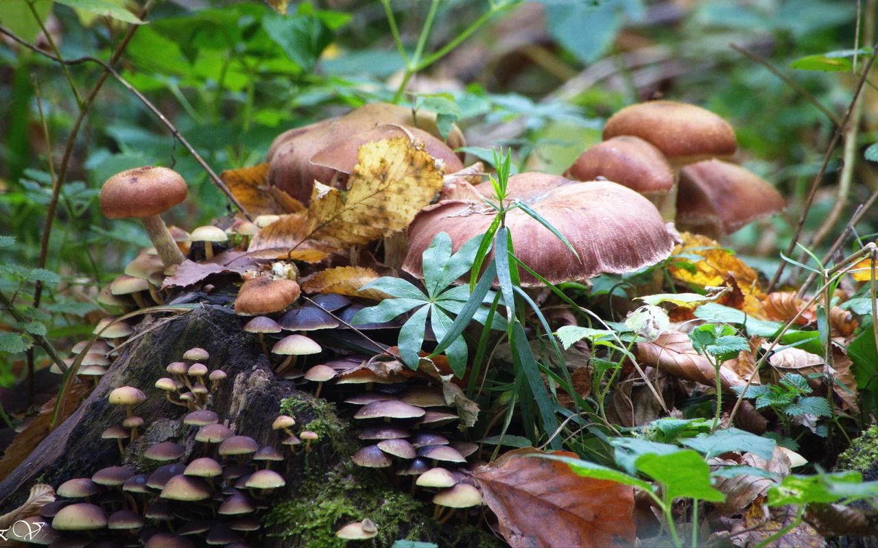 грибы, в осеннем, лесу