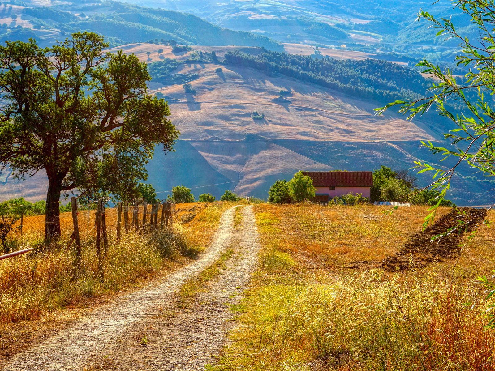 италия, дороги, campania, деревья, природа