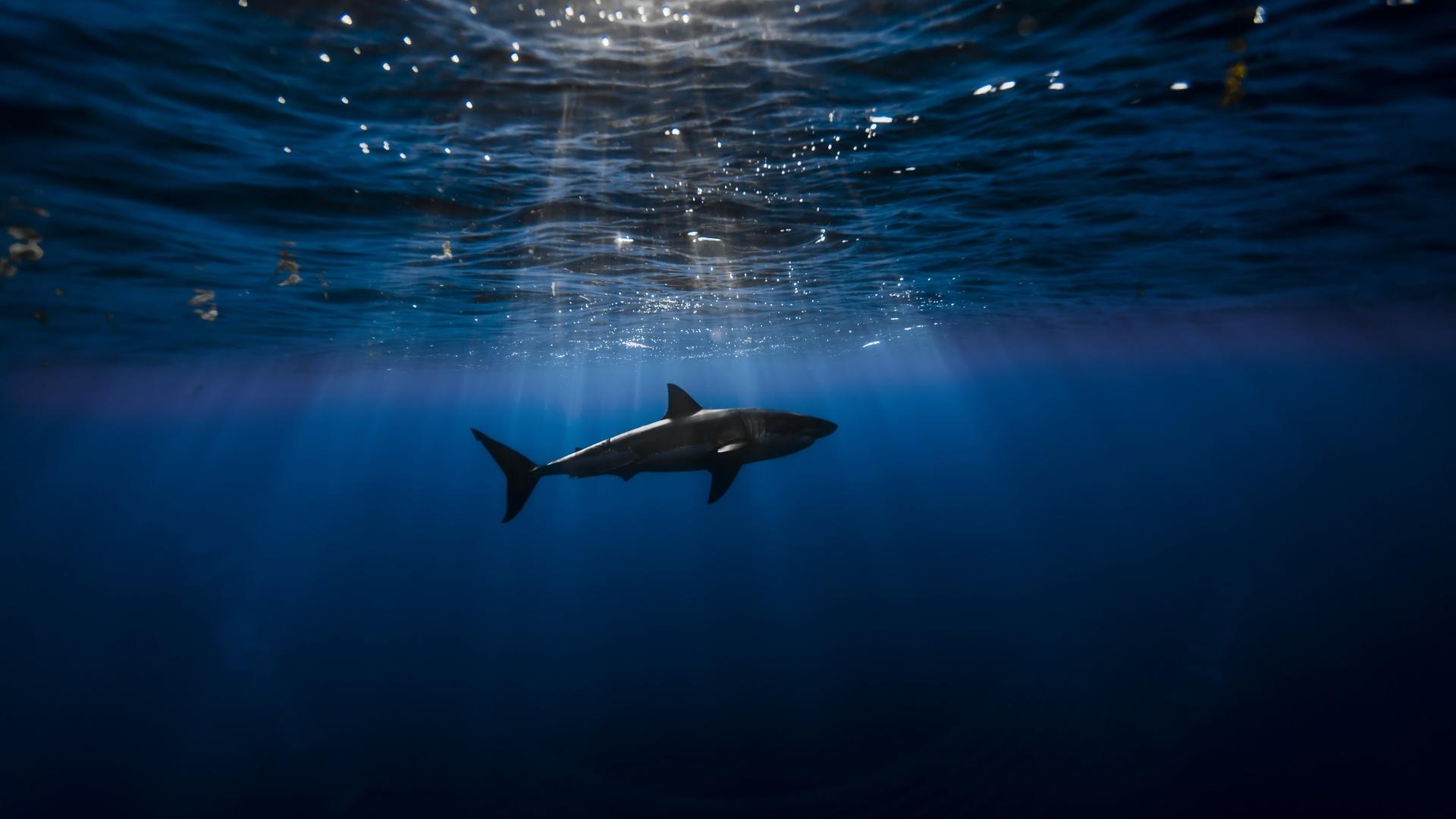 акула, глубина, лучи, океан, под водой