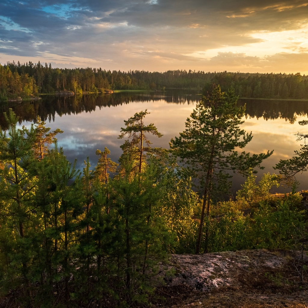 озеро, лес, карелия