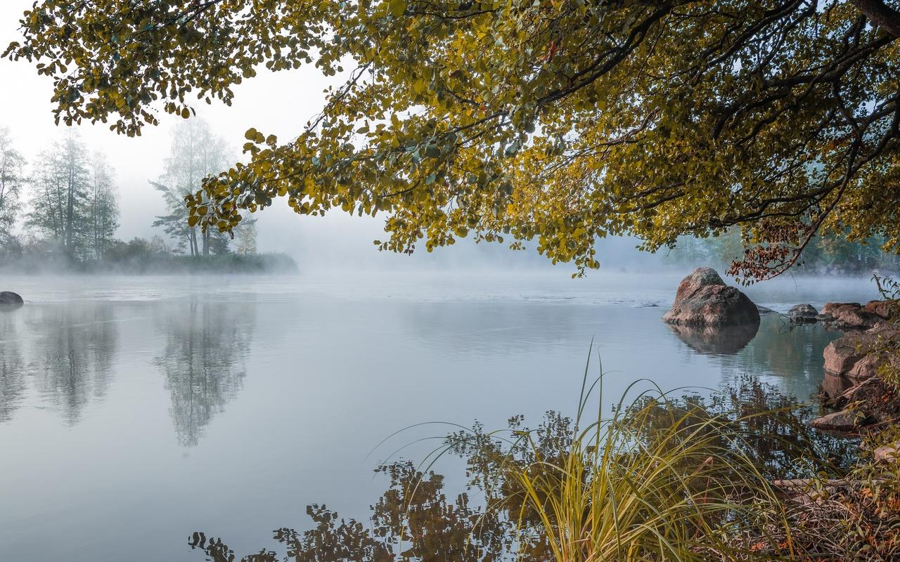 камни, озеро, утро, ветки, трава, туман, природа