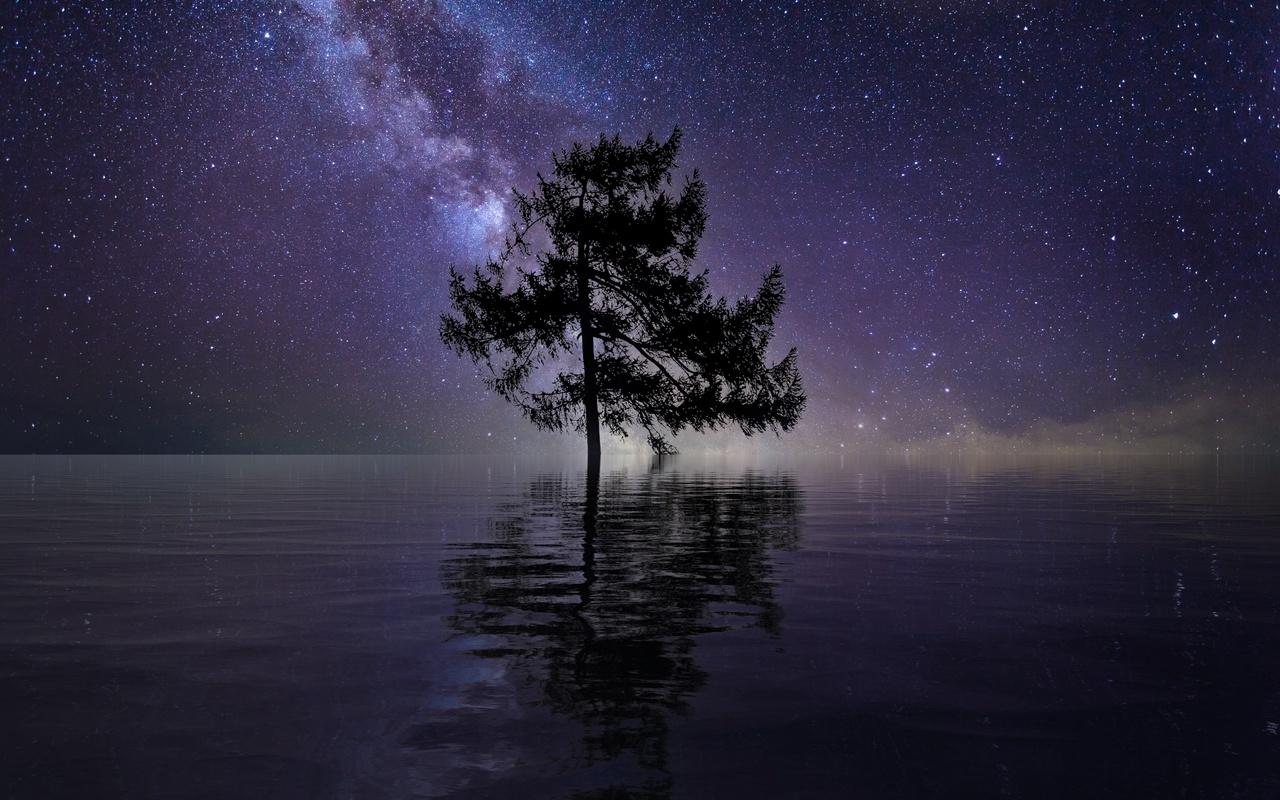 ночь, река, дерево, звезды