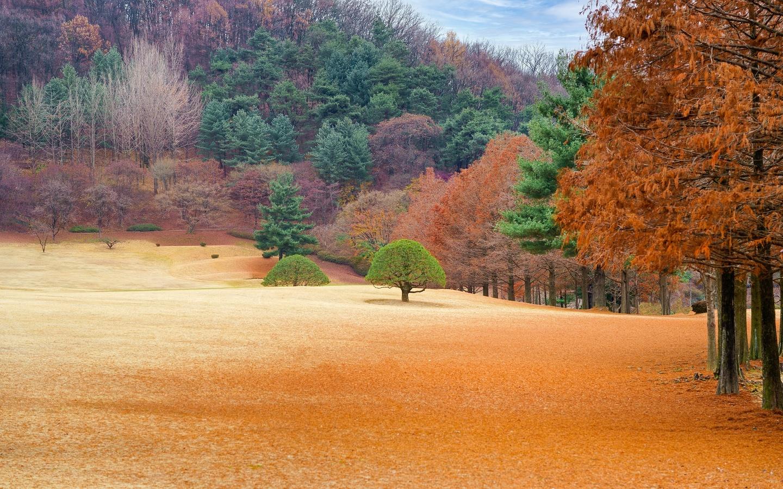 осень, пейзаж, краски