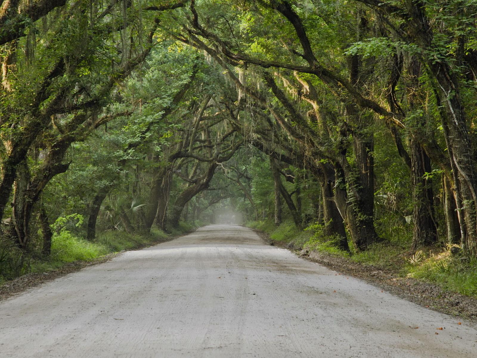 дорога, деревья, лес