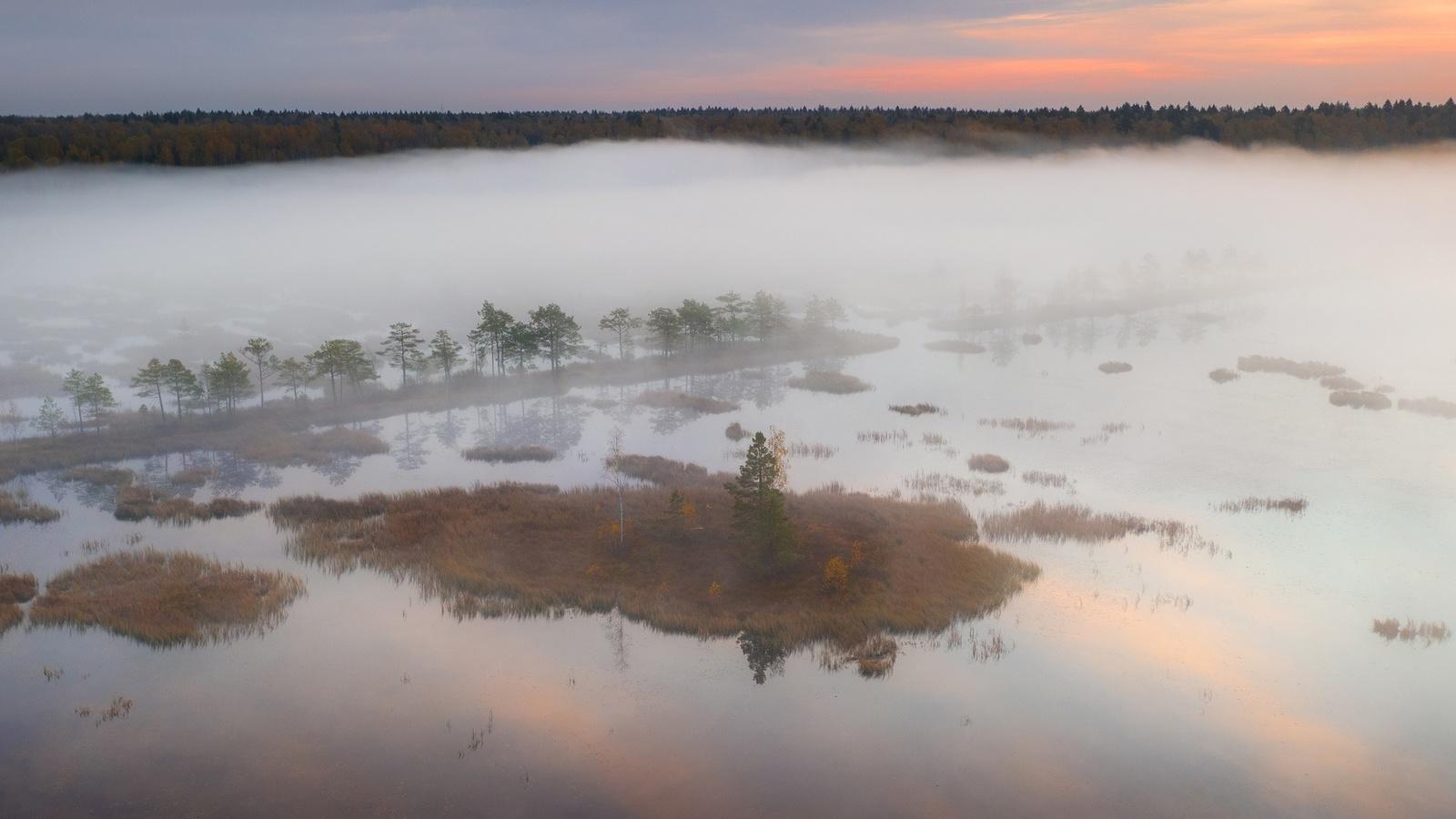лес, болото, туман, красиво, фотограф, илья гарбузов, широкоформатная