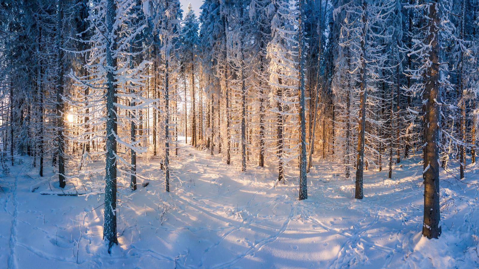 финляндия, лес, зима, снег, природа