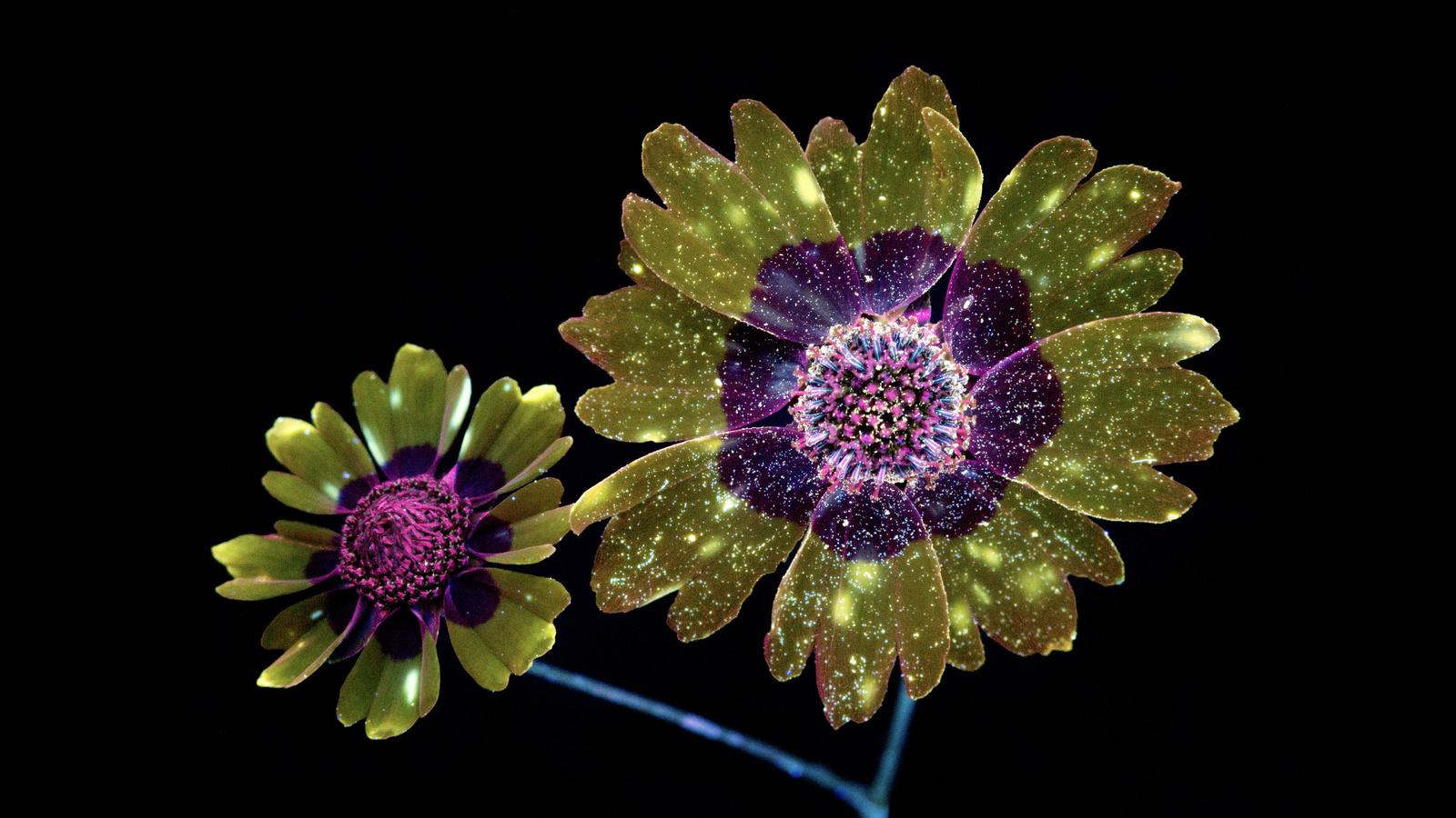 macos, mojave, flowers