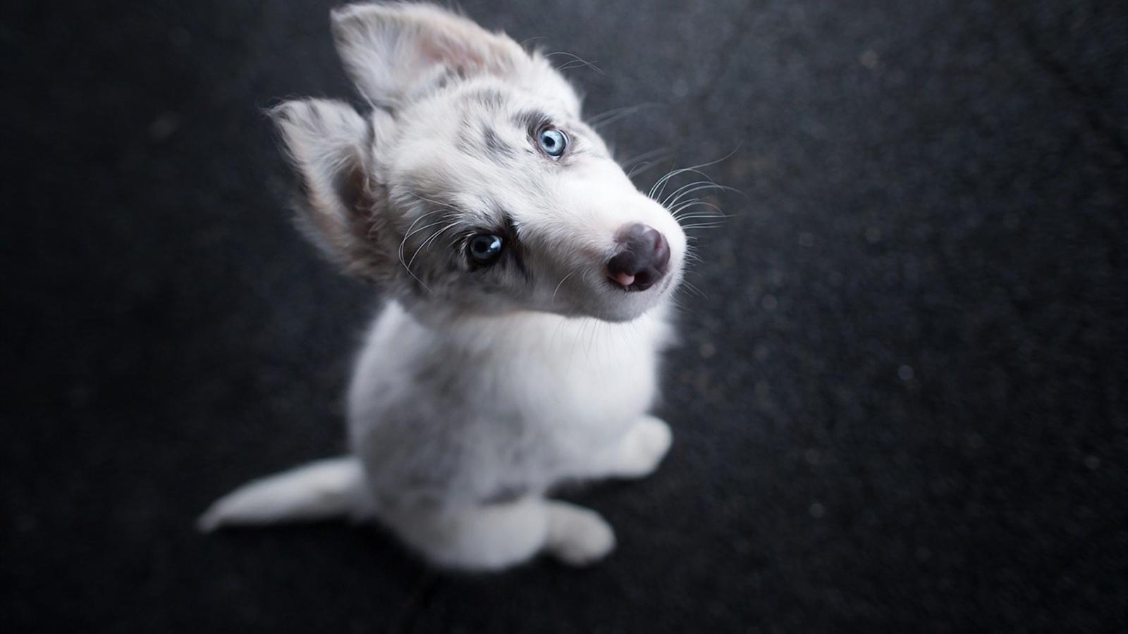 dog, puppy, cute