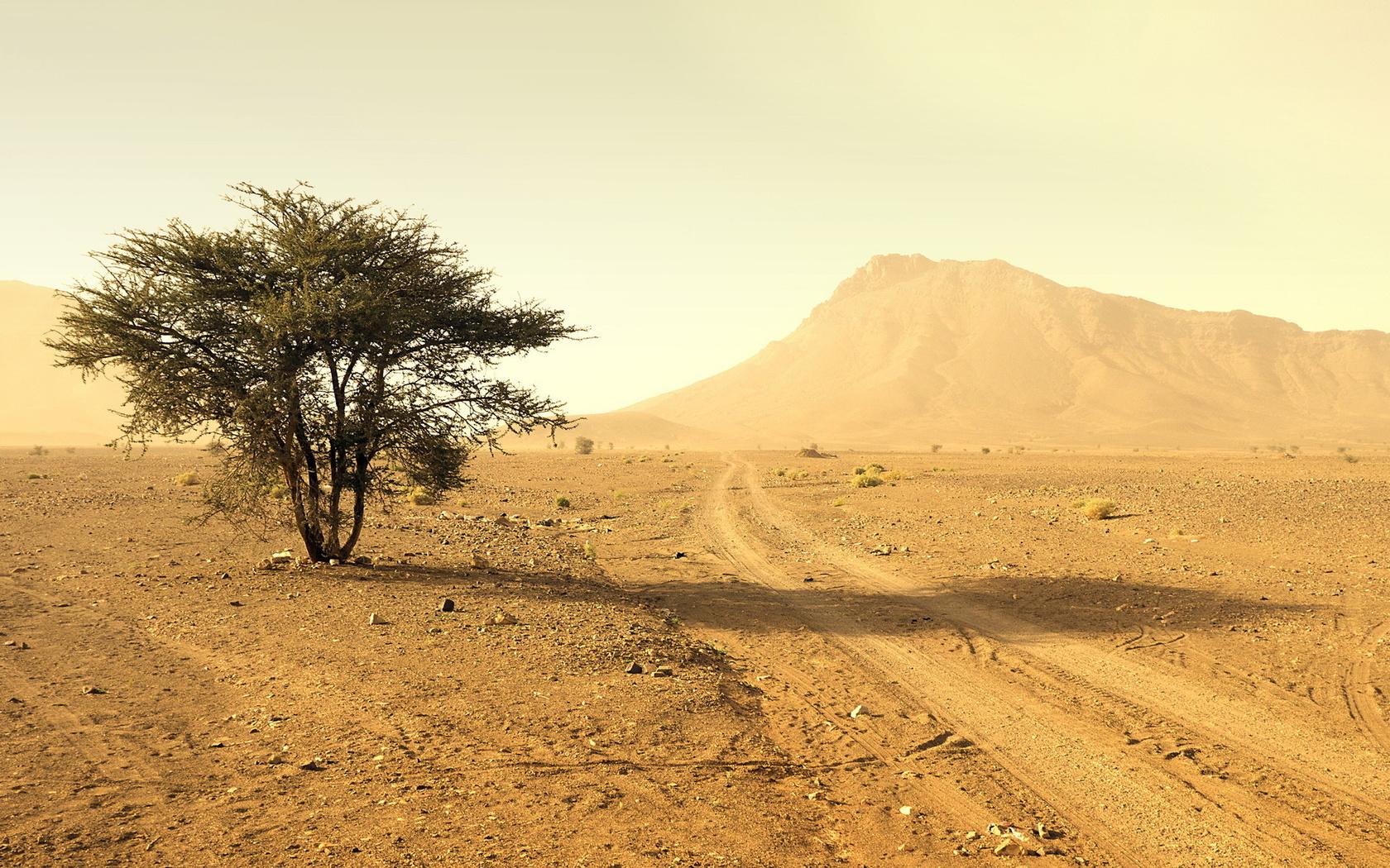 пустыня, дерево, дорога