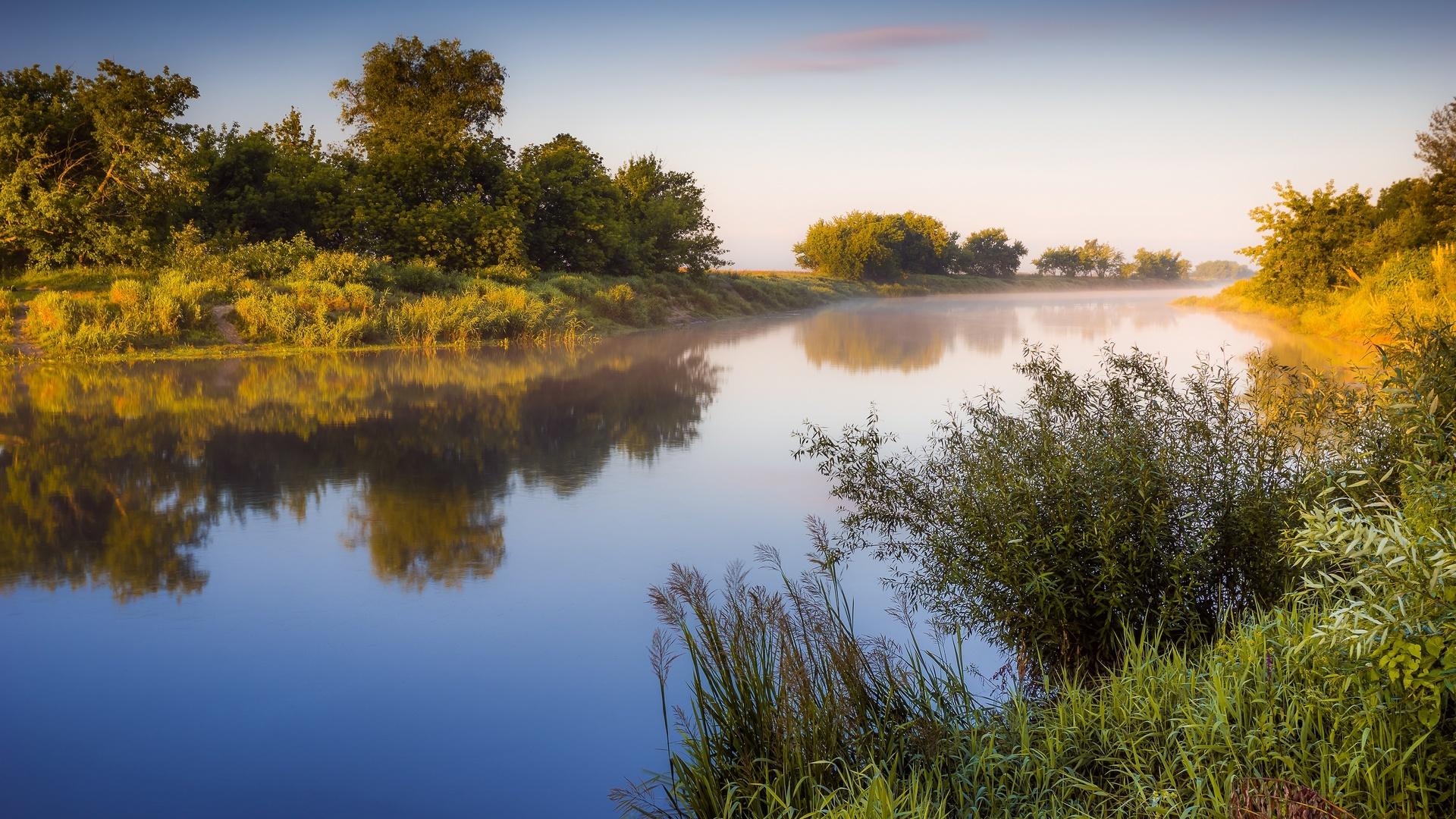 утро, кусты, трава, туман, природа