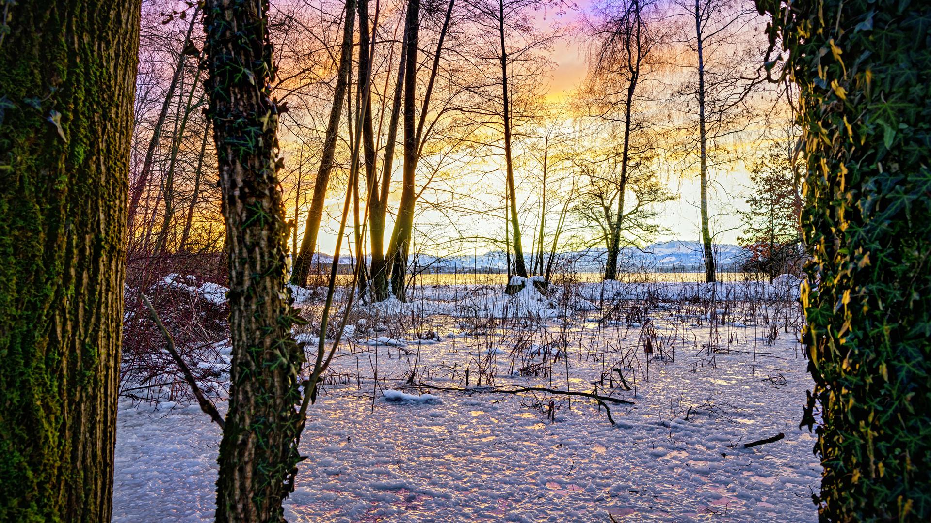 закат, зима, снег, лед, деревья, природа