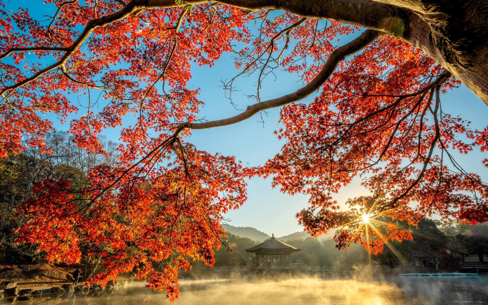 осень, пруд, пагоды, ветки, лучи света, туман, клён, природа