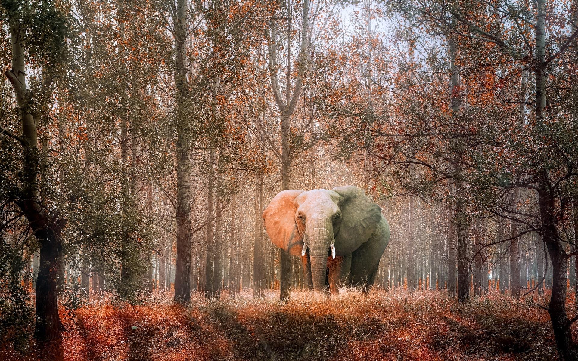 слон, лес, осень, фотошоп